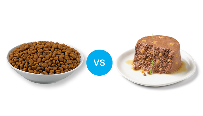 Dry Cat Food Vs Expensive