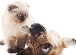 A Guide to Owning Your First Pet