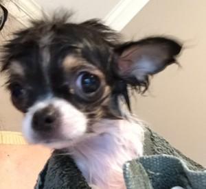 Pippi Squeak